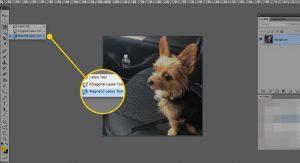 Hướng dẫn cách sử dụng Magnetic Lasso Tool trong Photoshop
